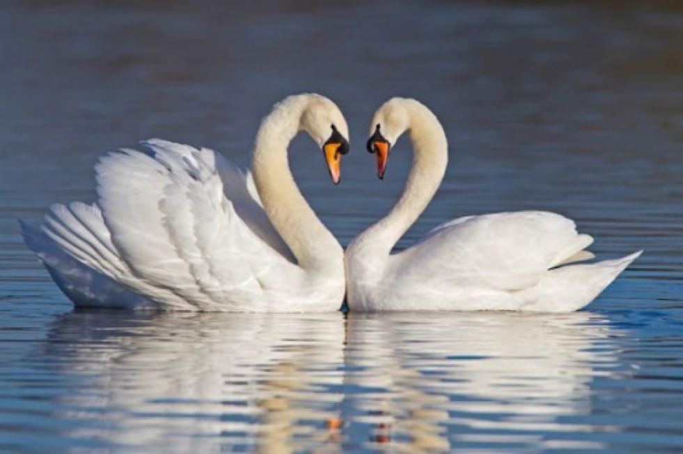 Символ сърце - символ на любовта